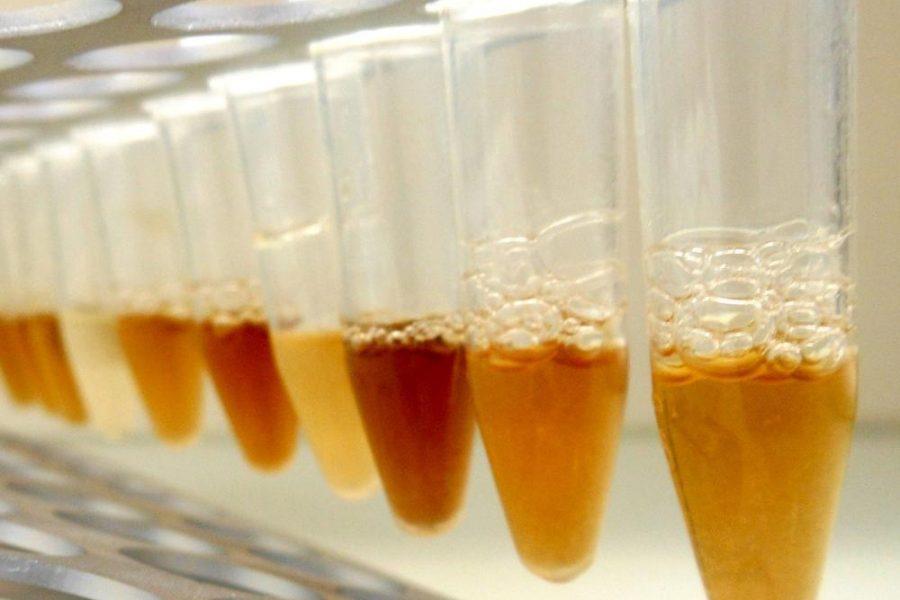 Bodenextrakte zur DNA Gewinnung, Copyright Nagler I mikrobalpina